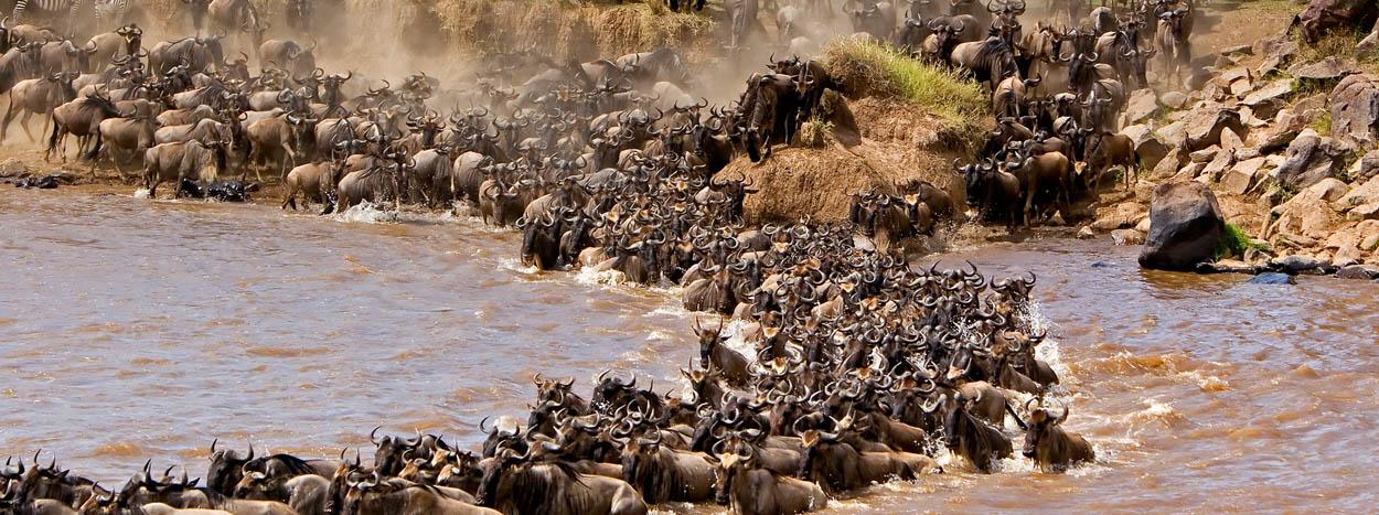 http://www.wheretosafari.com/wp-content/uploads/2016/09/MaasaiMara-1.jpg