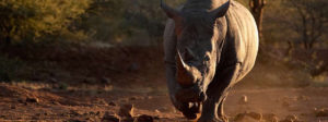 Madikwe Game Reserve Safaris